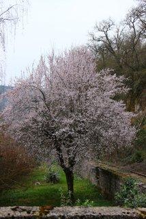 Plumtrees 019-001