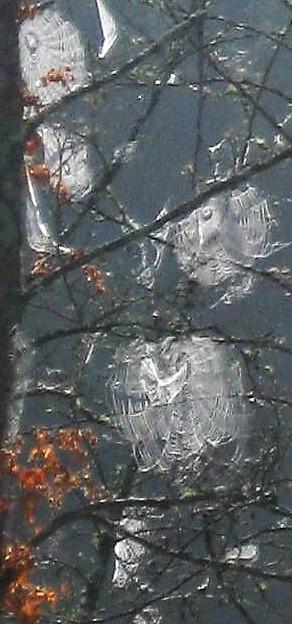 Fall2011 034